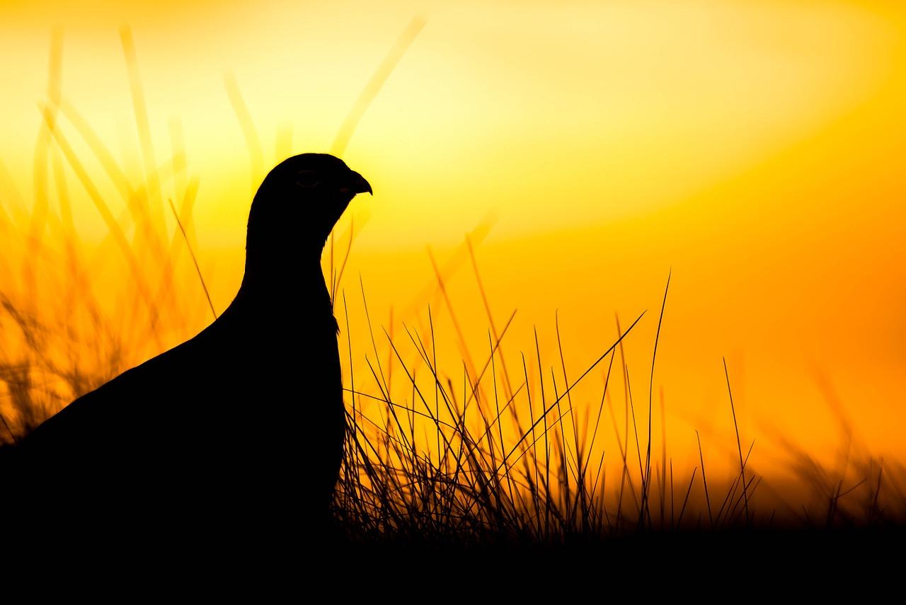 Yoga in Appenweier - früher Vogel